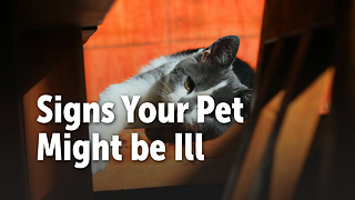 Signs Your Pet Might be Ill