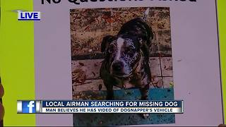 MacDill airman searching for family dog, suspected stolen - Video