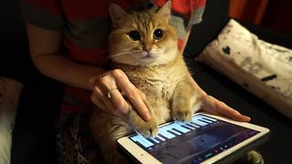Does this cat have a hidden musical talent? You won't want to miss what happens next!