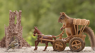 squirrel in chariot