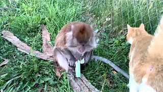 Monkey Does Not Want to Share Her Gum - Video