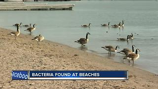 South Shore Beach closed Thursday over elevated levels of bacteria - Video