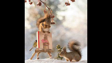 squirrels introduce new book