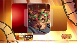 Art's Cameras Plus Picture of the Day for January 10! - Video