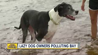 Dog poop is poisoning the waters of Tampa Bay - Video