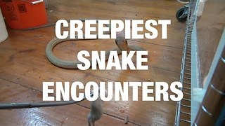 Aggressive King Cobras and Monster Pythons - the Creepiest Snake Encounters - Video