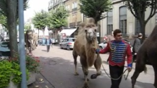 Incredible Animal Parade! - Video