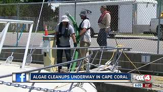 Algae cleanup in Cape Coral - Video