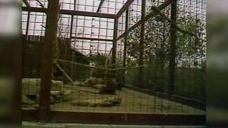 1987 - Indianapolis Zoo Closes - Video