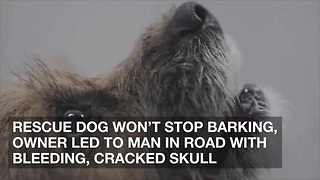 Rescue Dog Won't Stop Barking, Owner Led to Man in Road with Bleeding, Cracked Skull - Video