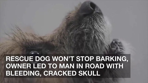 Rescue Dog Won't Stop Barking, Owner Led to Man in Road with Bleeding, Cracked Skull
