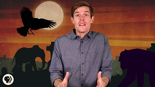 Do Animals Mourn Their Dead? - Video