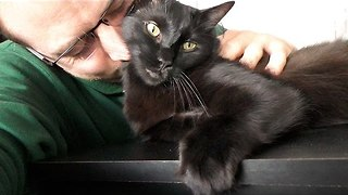 The Sweetest Black Cat in the World - Video