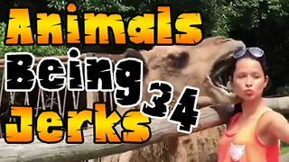 Animals Being Jerks #34 - Video