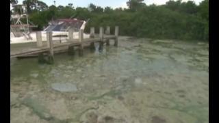 ACLU: State put public health at risk during 2016 algae crisis - Video