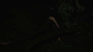 Tornado likely touched down in Richland County - Video