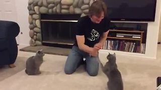 Talented Cats Show Off Array Of Tricks - Video