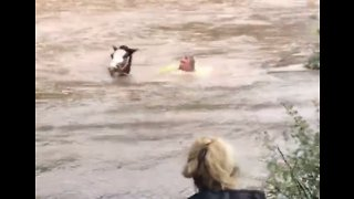 Farmer Swims Through Flooded Field to Save Stranded Horses - Video