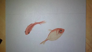 Artist draws incredibly realistic 3D goldfish - Video