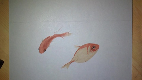 Artist draws incredibly realistic 3D goldfish