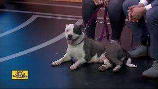 Pet of the week: Tina a sweet 2-year-old lady with a heart of gold - Video