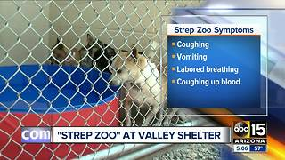 Strep Zoo illness discovered at Valley shelter - Video