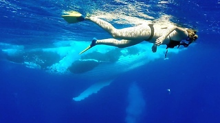 Swimmer in Tonga has close-encounter with humpback whales - Video