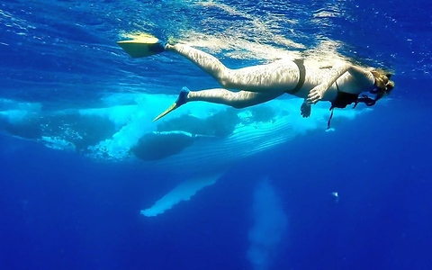 Swimmer in Tonga has close-encounter with humpback whales