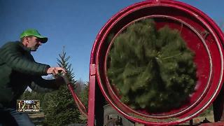 Luxemburg Christmas tree farm helps create family memories - Video