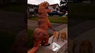 T Rex walking dogs - Video