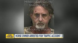 Owner arrested on animal cruelty charges after horse hit, killed by car - Video