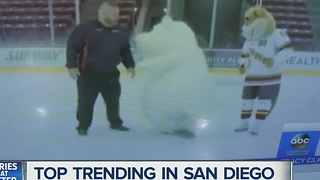 Polar bear mascot slips and falls... over and over again! - Video