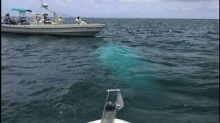 NTSB releases preliminary report on Bahamas helicopter crash that killed 7