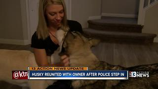 Husky reunited with owner after police step in - Video