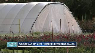 Nurseries taking 3 precautions to protect plants from freeze damage - Video