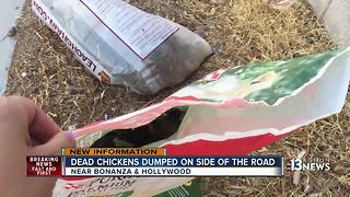 More dead animals found dumped in east Las Vegas - Video