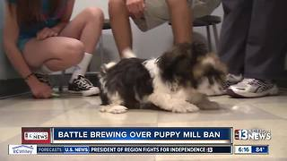 Battle brewing at Las Vegas City Hall over puppy mill ban - Video