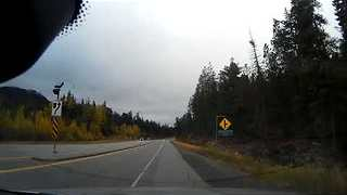 Dash Cam Captures the Moment Driver Hits Deer