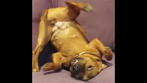 This pup is going a little crazy from self-isolation