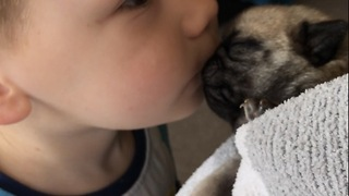 Little boy gives newborn pug a kiss - Video