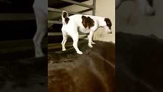 Dog Helps Horse Friend With Itch She Can't Reach - Video