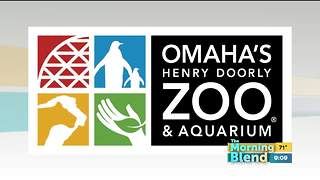 Omaha's Zoo and Aquarium - Video