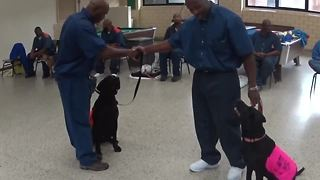 Michigan prison teams up with dog rescue group - Video