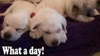 Cute Puppies Get Tiny Backpacks for First Day of Dog Training School - Video