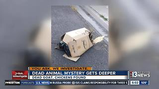 Dead animal mystery gets deeper - Video