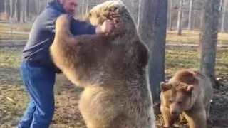 Real Life Bear Hugs - From Real Bears! - Video