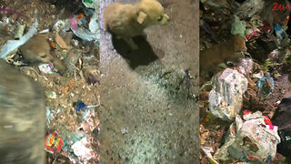 Puppy Rescued After Being Dumped In Garbage Truck