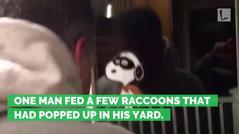 Man Makes the Mistake of Feeding Hungry Raccoons, Opens Door to Entire Army Waiting For Dinner