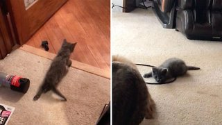 Kitten With Spinal Injury Plays With Friends After Miracle Recovery - Video