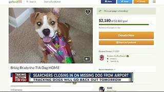 Searchers closing in on missing dog from airport - Video